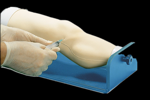 human knee joint medical teaching model