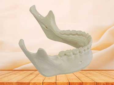 mandible bone