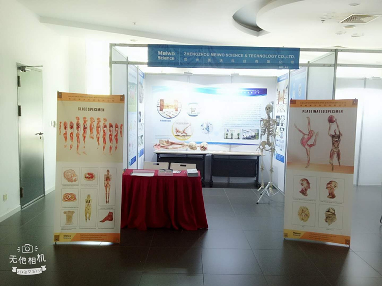 meiwo science plastination