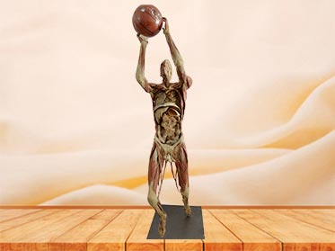 playing basketball plastination