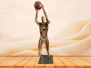 playing basketball specimen