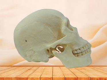 super human skull