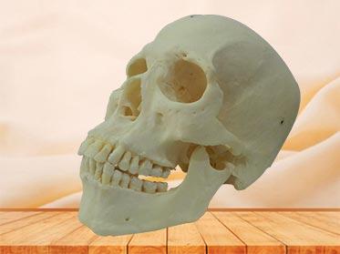 super human skull specimen
