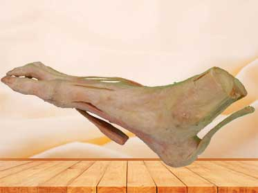 superficial muscle of foot