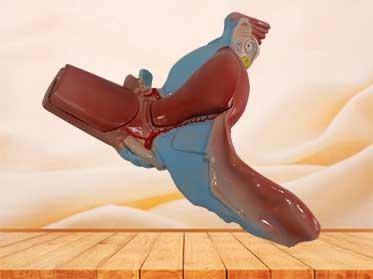 uterus model