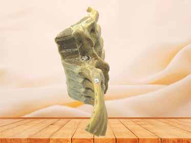 vertebral column section specimen